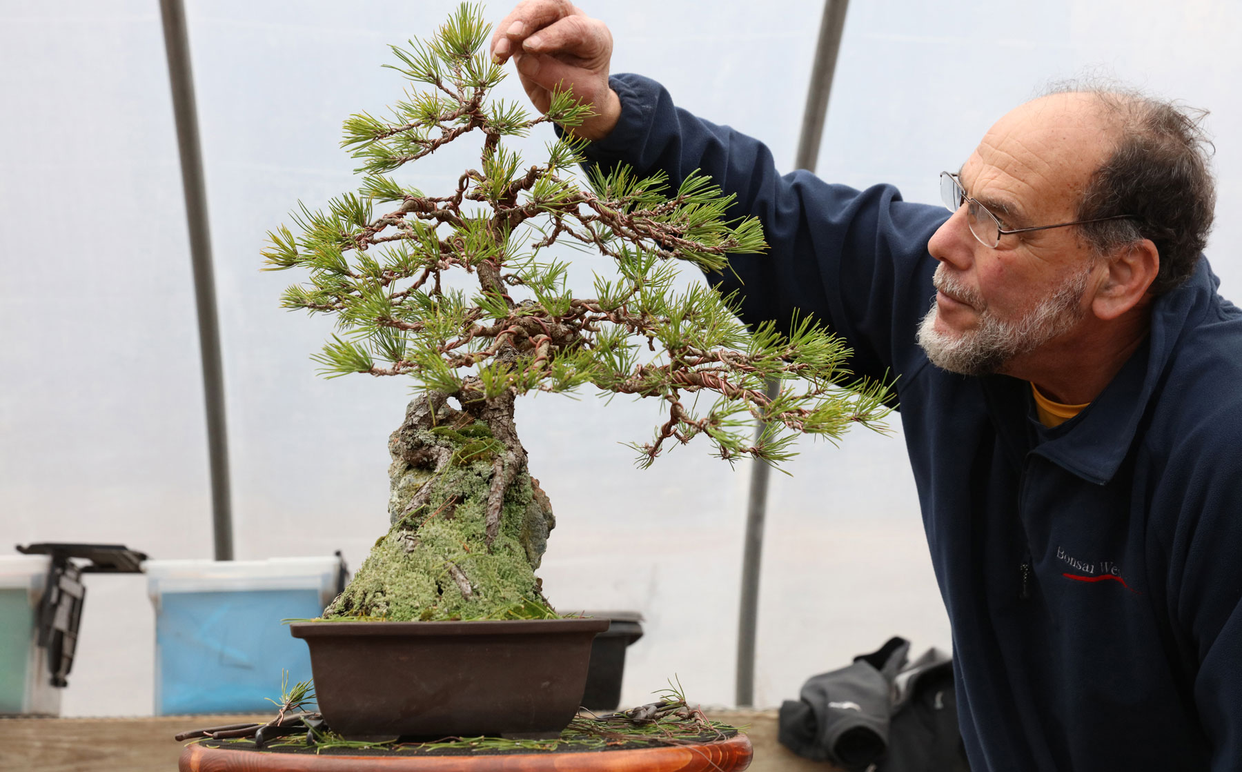 Michael Levin with bonsai
