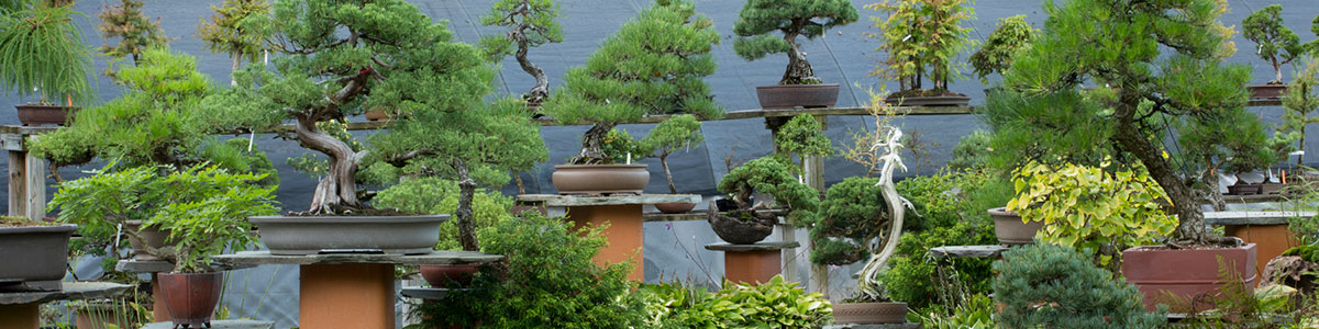 A gallery of bonsai from Bonsai West